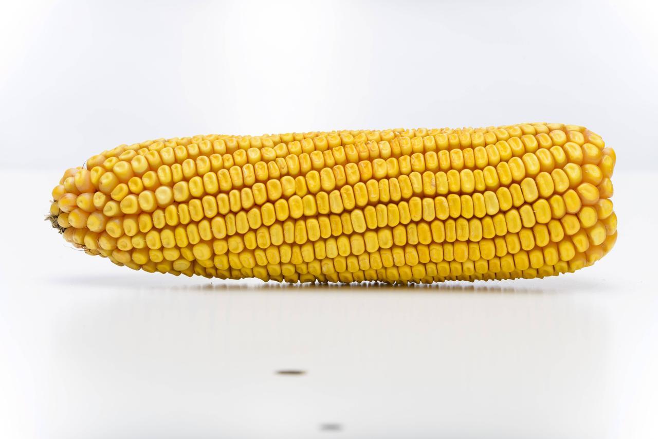 Семна кукурузы AS 33017, трехлинейный гибрид (ФАО 280)