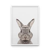 Постер на стену Кролик в кадре