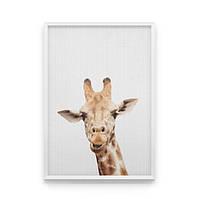 Постер на стену Любопытный жираф в кадре