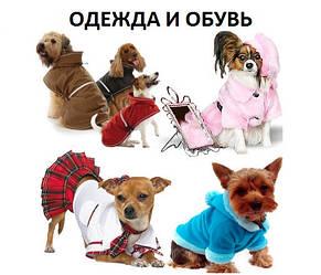 Одяг і взуття для тварин