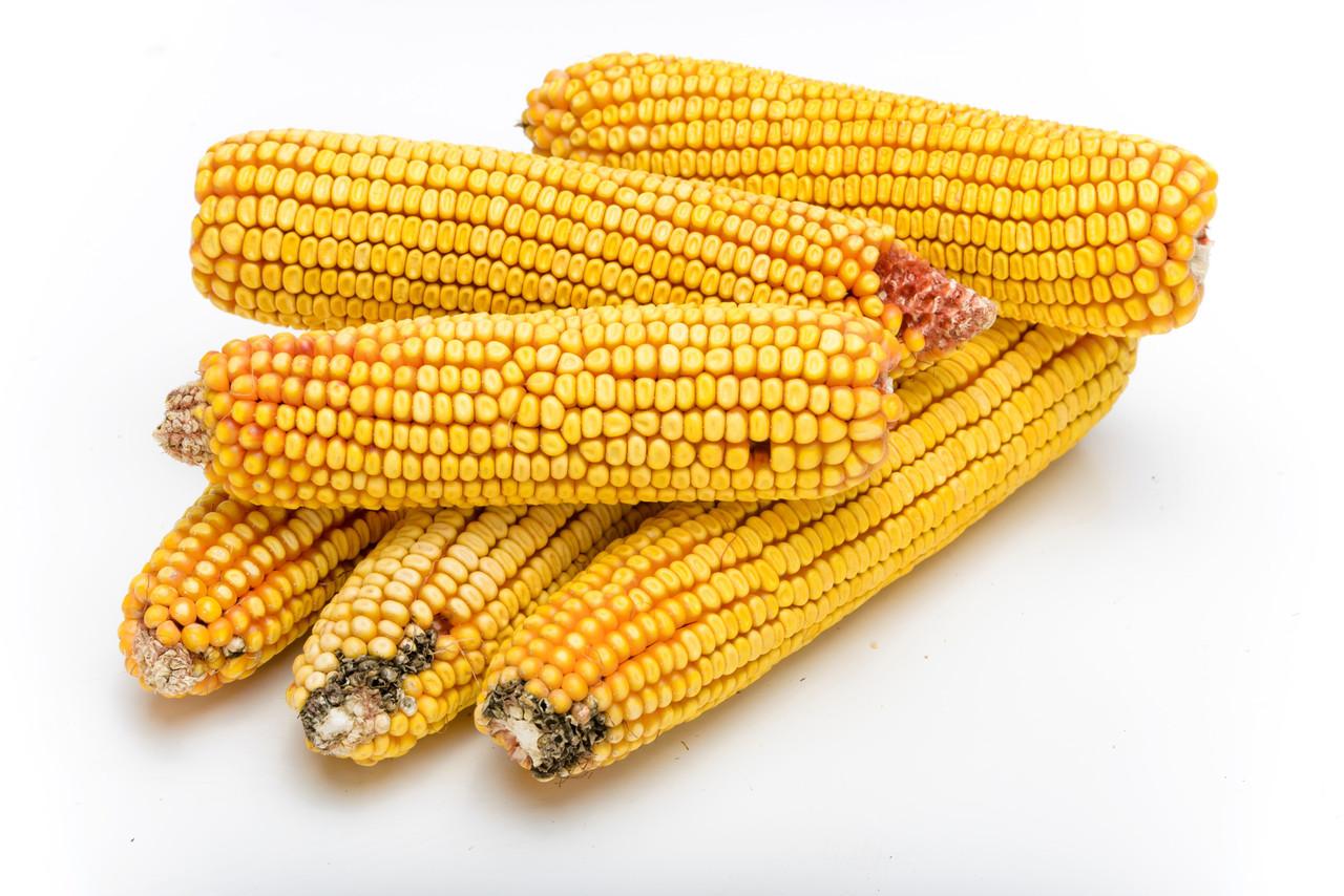 Семена кукурузы as 35003 new