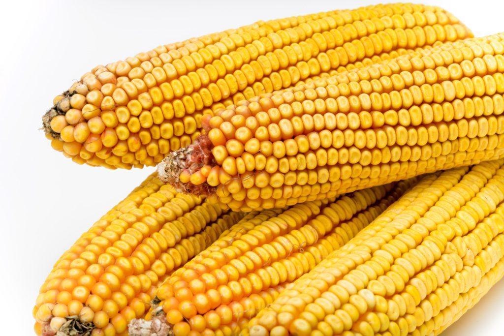 Семена кукурузы as 35004 new