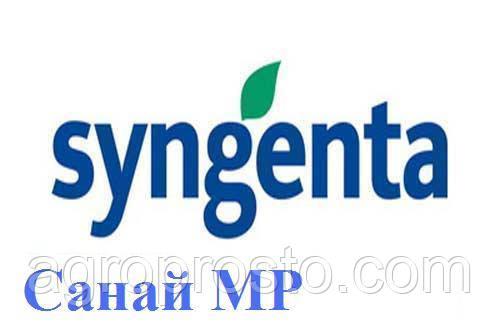 Семена под евролайтинг Санай МР (SANAY MR) Syngentа