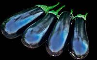 Семена баклажана Бриджит F1 (Brigitte), 100 сем., Rijk Zwaan