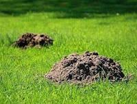Як позбутися кротів - на дачному, присадибній ділянці, дачі чи на городі ?
