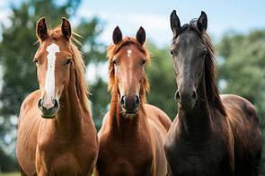 Обладнання для коней
