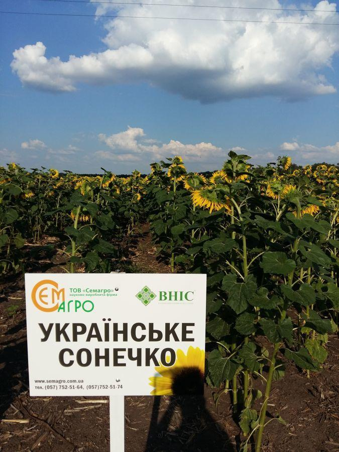 Подсолнечник Украинское солнышко (стандарт)