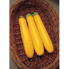 ГОЛД РАШ F1 / GOLD RASH F1, 5 семян — кабачок, Seminis (Садыба Центр)