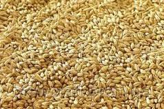 Солод зерновой ячменный измельчённый. 5 кг. Malteurop 2019 год