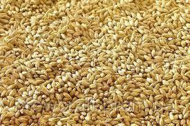 Солод зерновой ячменный измельчённый. 5 кг. Malteurop 2019 год, фото 2