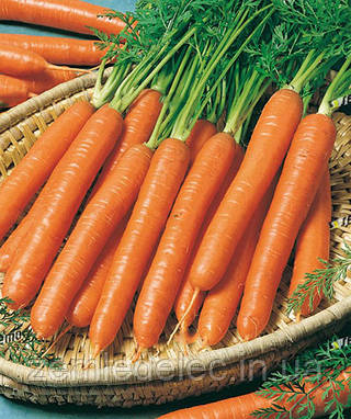 Семена моркови Рубина 500 гр. Semo