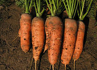 Шамарэ 0,5 кг. морковь Семо