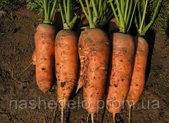 Семена моркови Шамарэ 500 гр. Semo