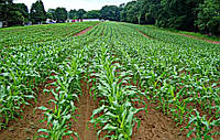 Баланс питания и новые возможности в защите растений