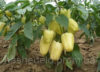 Семена сладкого перца Амика F1 1000 семян Semo