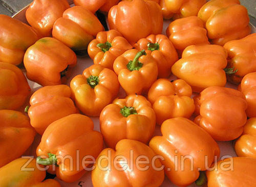 Семена сладкого перца Орени F1 1000 семян Semo