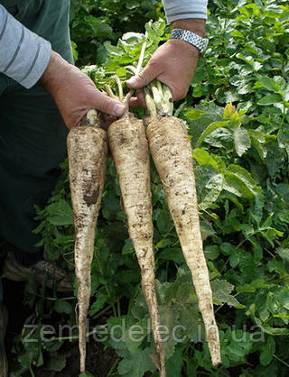 Семена пастернака Длинный белый 50 гр. Semo