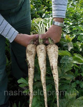 Семена пастернака Белас 0,5 кг. Semo