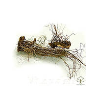 Рапонтикум сафлоровидный (Rhaponticum carthamoides) корень 100 грамм