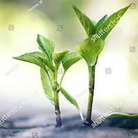 Агроволокно черное с перфорацией 50 плотность (1,6м*100м) Agreen