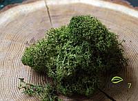 Стабилизированный мох Цвет Medium green 100 грамм.
