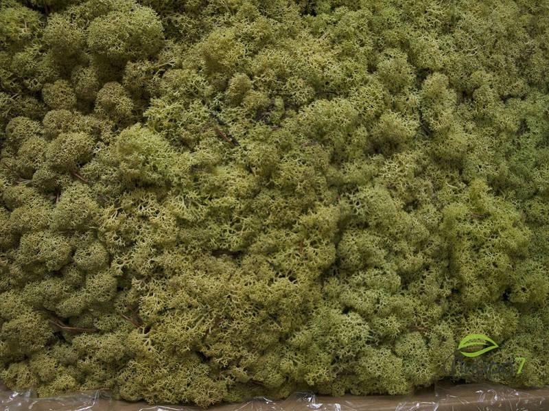 Стабилизированный мох оптом для фитостен  Цвет Old Spring Norske moseprodukter