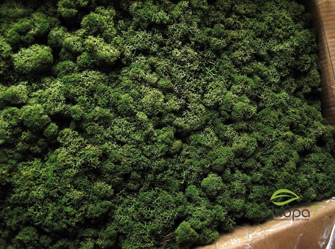 Стабилизированный мох Medium green Norske moseprodukter