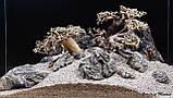 Композиція для акваріума. Бонсаї і Карпатський камінь, фото 2