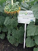 Семена подсолнечника НСХ 187. Урожайный гибрид 5,9 тн масличный 50% НСХ 187 устойчив к заразихе А-Е. Стандарт
