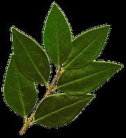 Лавровый лист, Грузия, 1кг