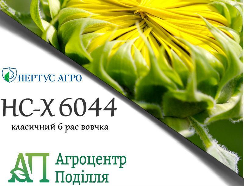 Семена подсолнечника НС-Х 6044 (95-100 дн.) НЕРТУС