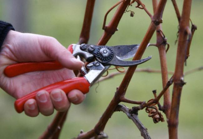Как подготовить малину к зиме: подкормка, обрезка и уход