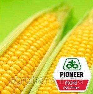 Семена кукурузы Pioneer P9241 AQUAmax