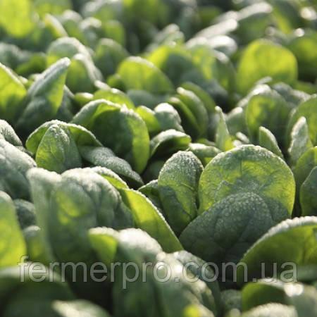 Семена шпината Тукан F1 \ Toucan F1 1.000.000 семян Rijk zwaan
