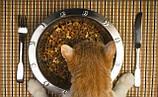 Корма и витамины для кошек