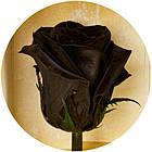 Долгосвежая троянда Чорний Діамант 5 карат на короткому, фото 2