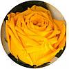 Долгосвежая роза Золотистый Хризоберилл в подарочной упаковке (не вянут  до 5 лет), фото 2