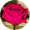 Долгосвежая роза Малиновый Родолит 5 карат на коротком стебле, фото 2