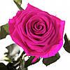 Долгосвежая роза Малиновый Родолит 5 карат на коротком стебле, фото 4