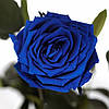Три долгосвежих розы Синий Сапфир 5 карат на коротком, фото 2
