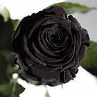 Три долгосвежих розы Черный Бриллиант 5 карат на коротком, фото 2