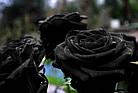 Три долгосвежих розы Черный Бриллиант 5 карат на коротком, фото 4
