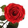 Долгосвежая роза Красный Рубин 5 карат, фото 2