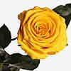 Долгосвежая роза Солнечный Цитрин 7 карат (короткий стебель), фото 2