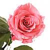 Долгосвежая роза Розовый Кварц 7 карат (короткий стебель), фото 2