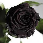 Три долгосвежих троянди Чорний Діамант 7 карат (коротке стебло), фото 2