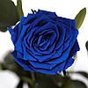Три долгосвежих розы Синий Сапфир 7 карат (средний стебель), фото 2