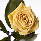 Три долгосвежих троянди Жовтий Топаз 7 карат (середній стебло), фото 2