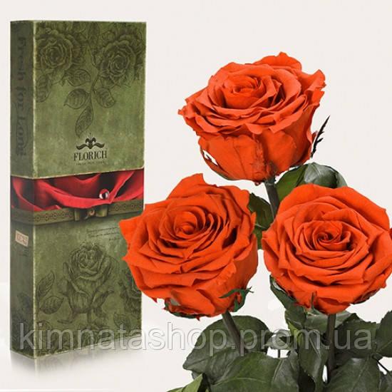 Три долгосвежих троянди Огненый Бурштин 7 карат (середній стебло)