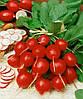 Семена редиса Сакса2 1 кг. Semo